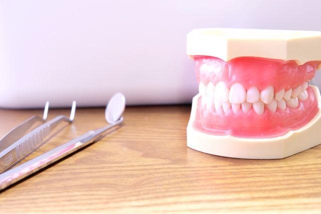 歯列模型と歯科器具