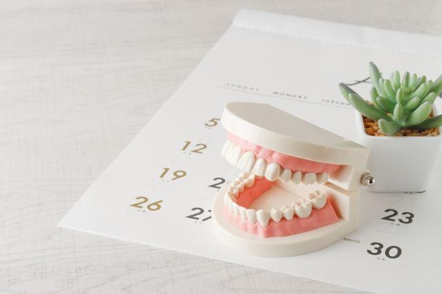 カレンダーの上に置かれた歯列模型